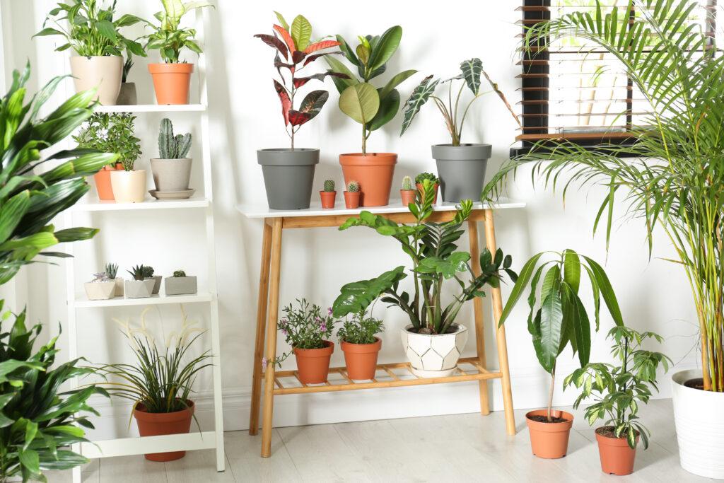 les bienfaits des plantes vertes